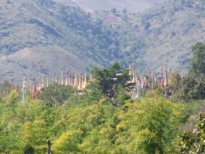 Forest of Old Stupas (part of 2,527 stupas of 11th to 13th century) Ancient Buddhist Site Ancient Stupas Buddhist Culture Buddhist Stupas Composition Distant View Full Frame Growth Inle Lake Kakku Mountain Myanmar No People Outdoor Photography Places Of Worship Religion Shan State Stupas Sunlight Tourism Tourist Attraction  Tourist Destination Tree Unusual