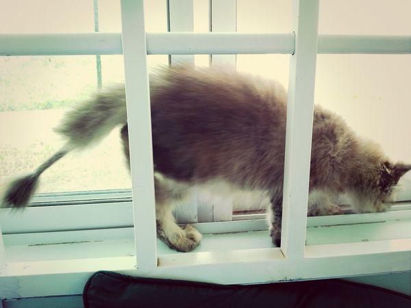 si gemok kiki baru lepas mandi Kitten #adorable Afterbath Pet Lovelovelove∞