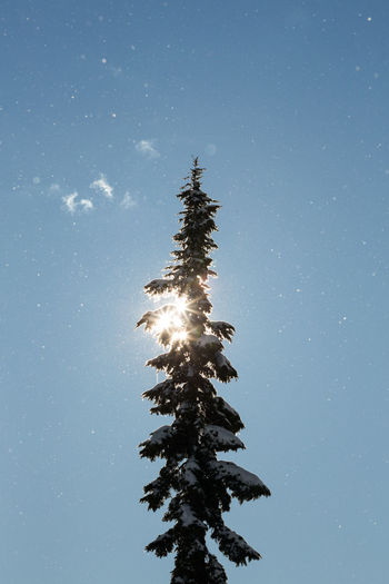 Low angle view of tree on snow against sky at night