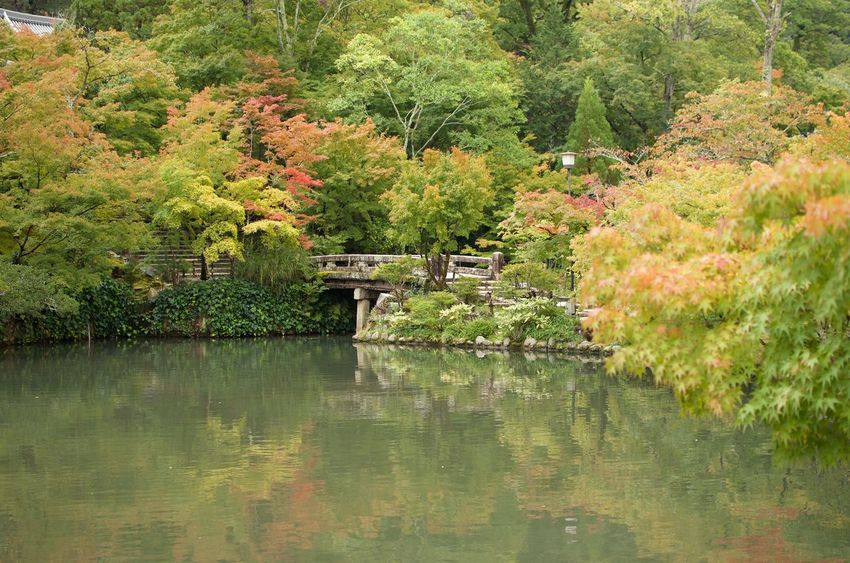 Early fall foliage reflects on a calm pond in a garden in Kyoto, Japan Japan Travel Autumn colors Japanese Garden Water Reflections Tranquility No People Beauty In Nature Lush Foliage Reflection Foliage Peace And Quiet Calm