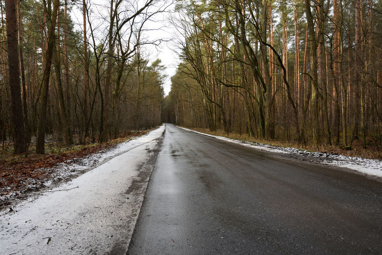 Asphalt road in winter Tree Direction Road The Way Forward Snow Winter Plant Transportation Diminishing Perspective No People Forest Nature Empty Road Tranquility Day Beauty In Nature Land Asphalt Tranquil Scene Non-urban Scene vanishing point Outdoors WoodLand Surface Level