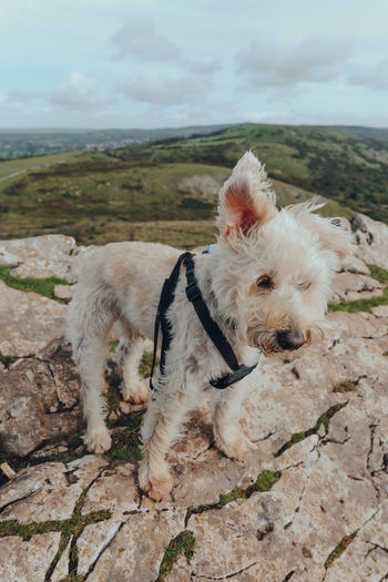 Portrait of dog lying on land
