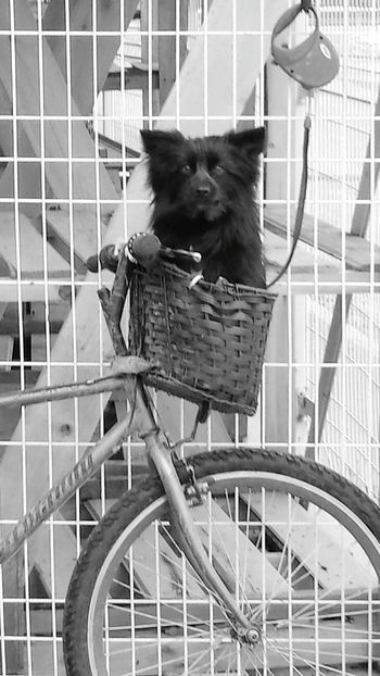I saw this dog outside no frills .who ever owns him your verry lucky to have such a cute dog that stays in a basket:) Cute Pets Taking Photos Enjoying Life Check This Out