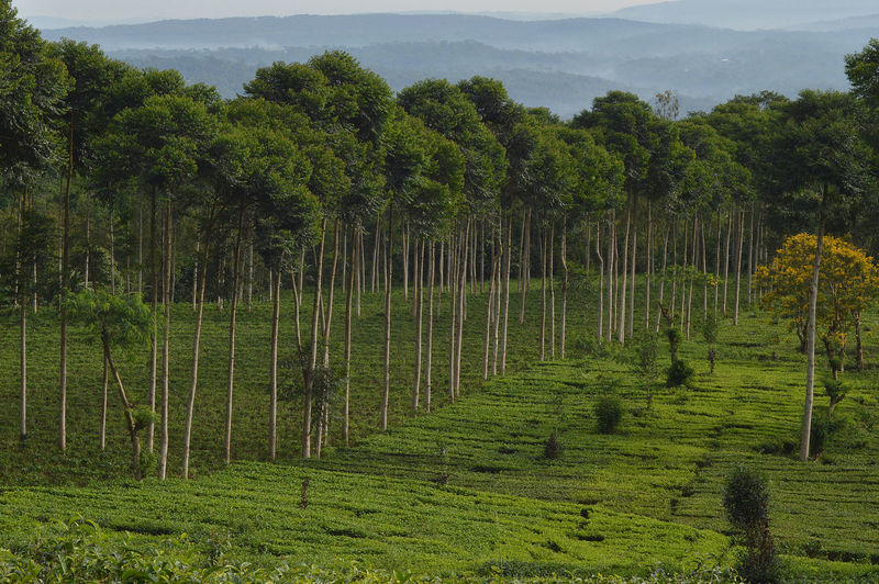 Scenic view of trees growing on field