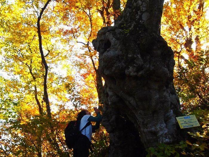 2012.11.4荒島岳 Beauty In Nature Autumn Outdoors Hiking Mountain Autumn Leaves Japan 秋 紅葉 荒島岳 トトロの木