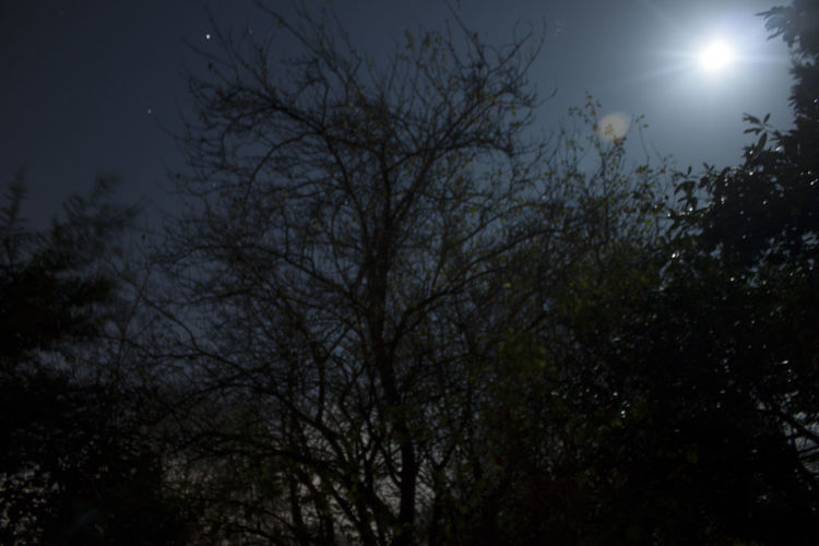 Lit Up By The Moonlight -Just Smile and Enjoy Autumn Nightphotography Surrey Astronomy Back Garden Bare Tree Beauty In Nature Branch Glow Glow From Moon Growth Low Angle View Moon Moon Lit Moonlight Nature Night No People Outdoors Scenics Sky Tranquility Tree Woking Perspectives On Nature EyeEmNewHere See The Light