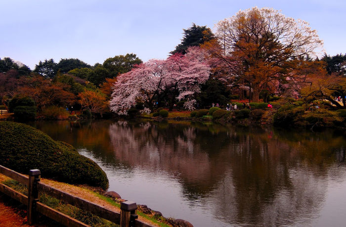 Relaxing Enjoying Life Hello World Taking Photos EyeEm Japan Japanese Culture Sakura2016 Sakura Cherry Blossom Tokyo,Japan Urban Spring Fever Spring Spring 2016 Spring Flowers