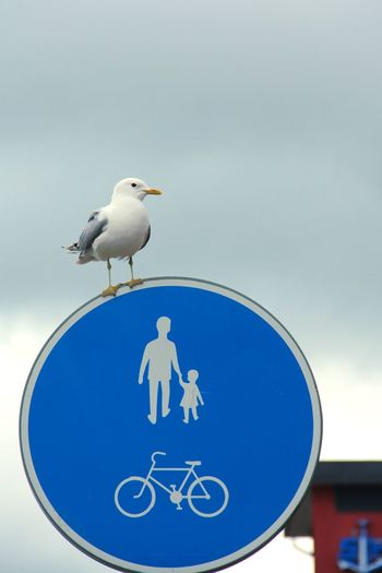 Bicycle,Men,Bird