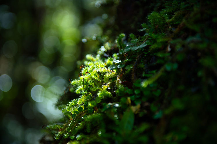 Close-up of moss growing on tree