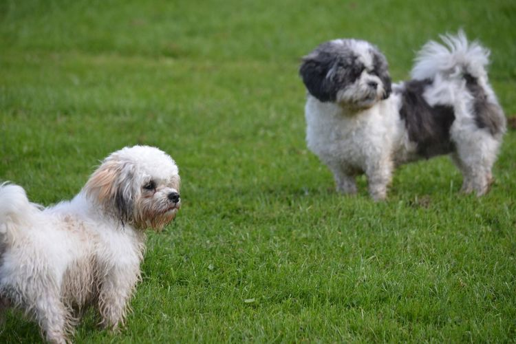 Dogs Double Trouble Cute Pet Photography