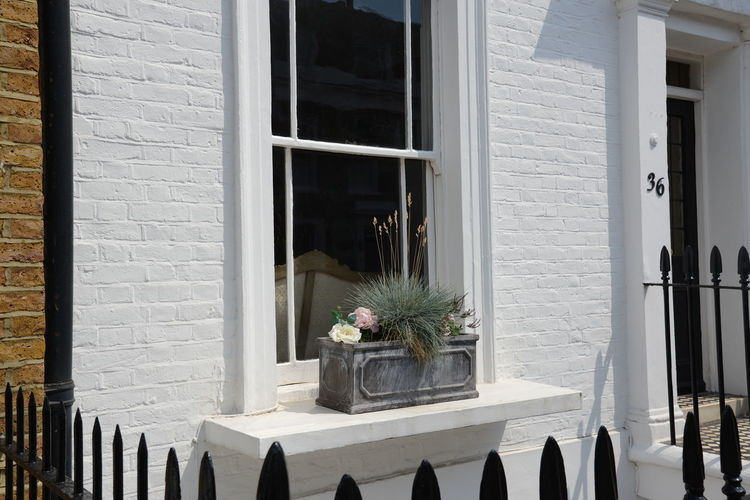 Potted plants on window sill of building
