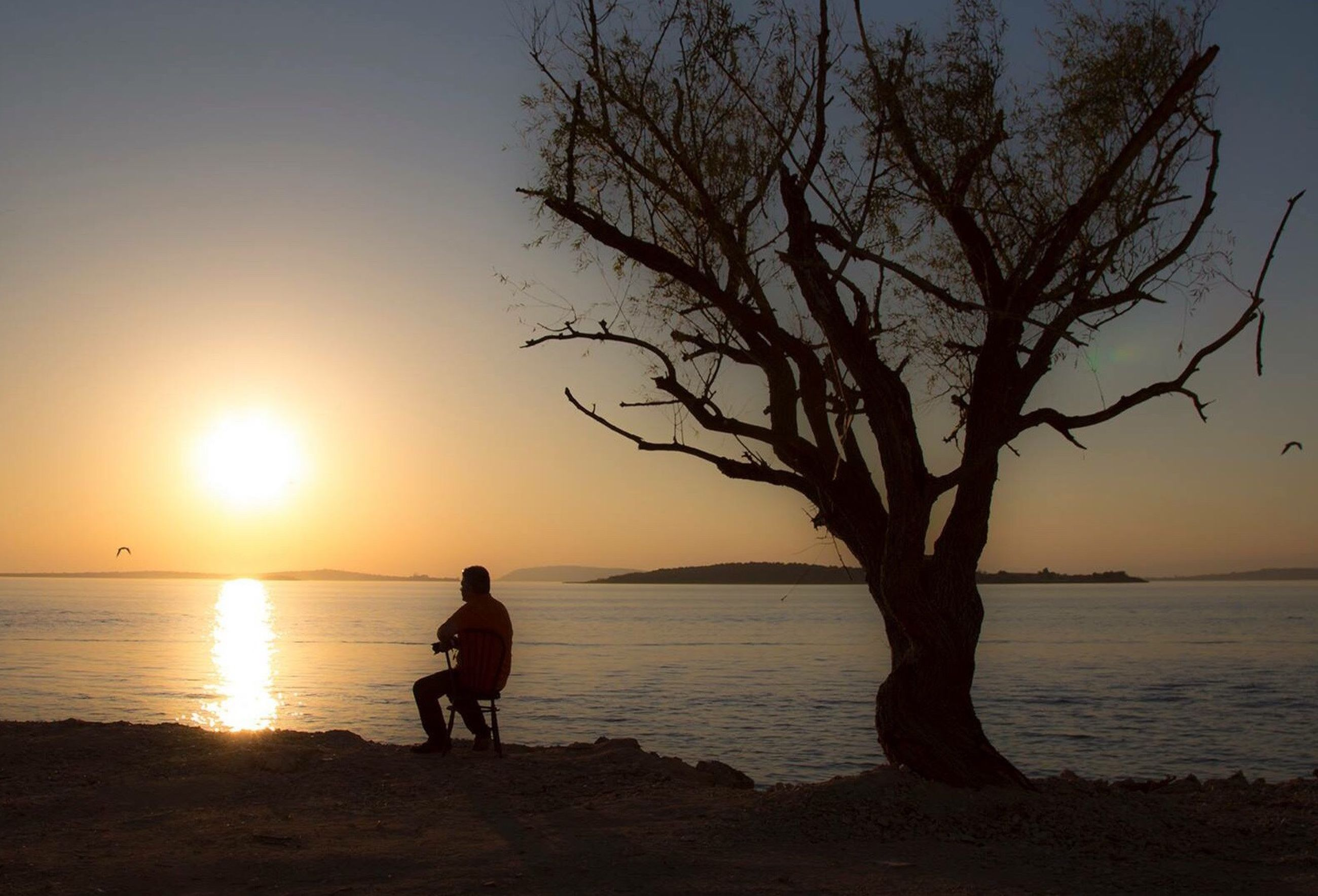 sunset, sea, full length, one person, beach, beauty in nature, one man only, nature, only men, tranquility, tree, people, outdoors, water, silhouette, adults only, sun, scenics, branch, pets, sky, dog, real people, horizon over water, adult, human body part, day