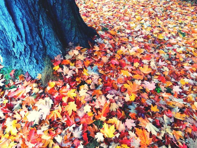 Relaxing Taking Photos Check This Out Fall Foliage