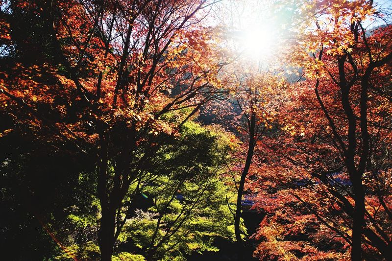 Low angle view of trees in forest during sunny day