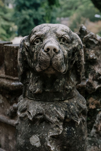 Sintra (Portugal) Sintra, Portugal Travel Travel Destinations Animal Themes Close-up No People Art And Craft Representation Sculpture Looking At Camera Front View Portrait Animal Head  Dog Stone Antique