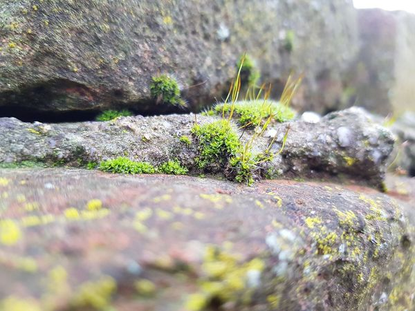 Living Stone Green Color Stone Nature Photography Moss Close-up No People Nature Selective Focus Day Outdoors Plant Fragility Growth Beauty In Nature