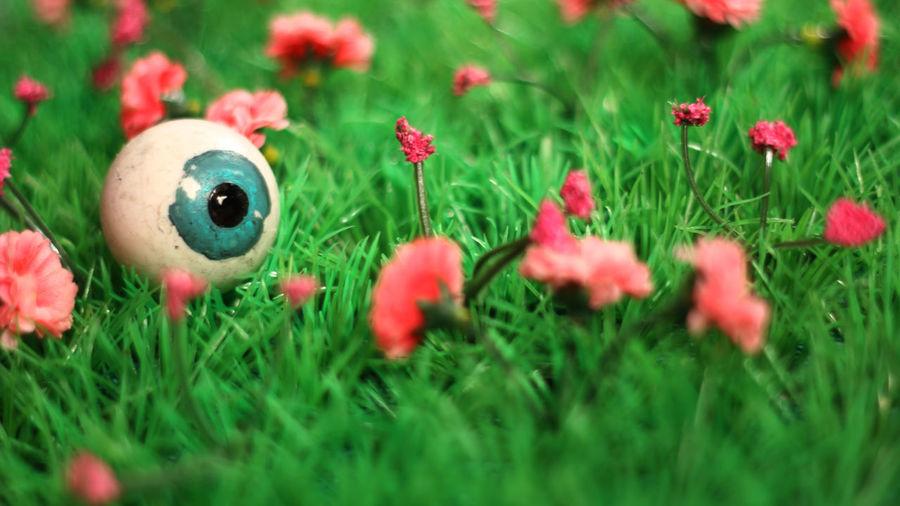 Beauty In Nature Close-up Cookbook Creative Eye Eye Em Eyeball Flower Focus On Foreground Freshness Garden Grass Growth In Bloom Nature Organ Pink Color Plant Selective Focus Strange Strangeness Vegan Vegetarian Weird Zoology