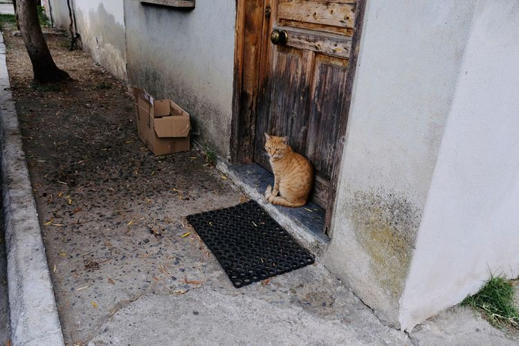 Cat looking at entrance of building