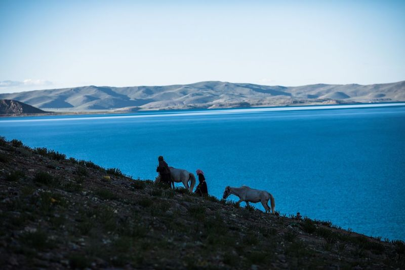 View of a horse in the sea against mountain range