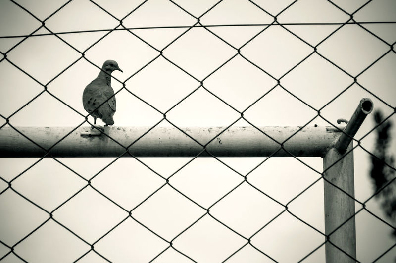 Bird Photography Nature Nature Photography Animal Animal In The Wild Animal Themes Animal Themes. Animal Wildlife Animals In The Wild Ave Beauty In Nature Bird Blackandwhite Day Monocrome No People One Bird Outdoors Pretoebranco