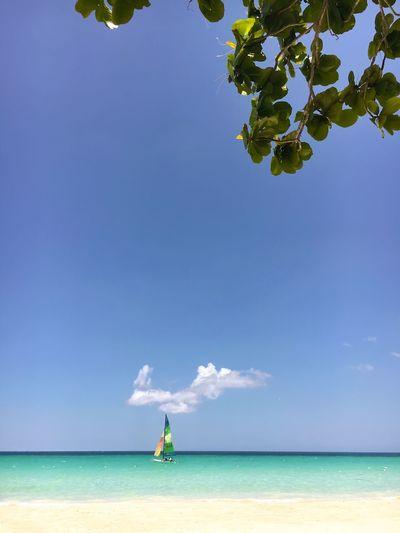 ...sail away...