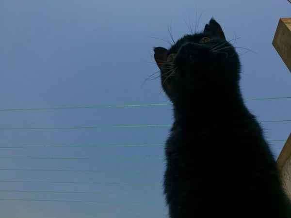 Outdoors Animal Wildlife Pets Animal Themes Domestic Animals Domestic Cat Cats Cat Gato Migatomodelo Feline ElMushu