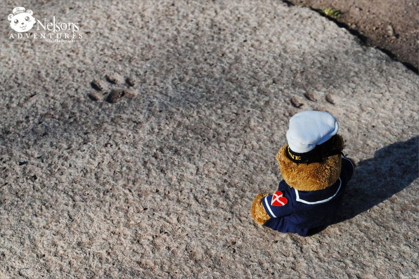 Nelson looks at animal foot prints. 🐾 NelsonsAdventures Malephotographerofthemonth Hello World Taking Photos Paws Teddy