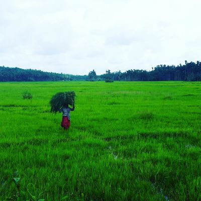 The Week On EyeEm Agriculture Field Crop  Farmer Green Color One Person Cloud - Sky Adults Only Cereal Plant Nature Day Farm Outdoors Cultivated Land Growth Plant Occupation Adult Rural Scene Working Kerala Kerala India God's Own Country