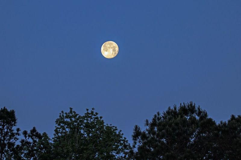 Setting Moon Astronomy Beauty In Nature Circle Clear Sky Full Moon Geometric Shape Low Angle View Moon Nature Night No People Outdoors Planetary Moon Plant Scenics - Nature Sky Space Tranquil Scene Tranquility Tree Treetop