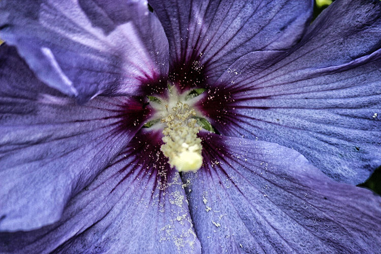Macro shot of purple flower