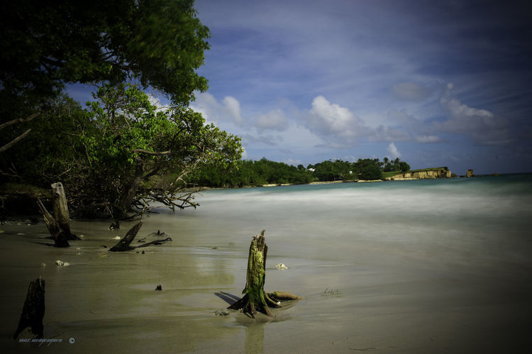 Beach Beach Life Beach Photography Beauty In Nature Cloud - Sky Day Growth Guadeloupe River Guadeloupe-F.W.I Guadeloupeislands Lake Landscape_Collection Landscape_photography Nature No People Outdoors Plant Reflection Sea And Sky Seascape Sky Tree Water