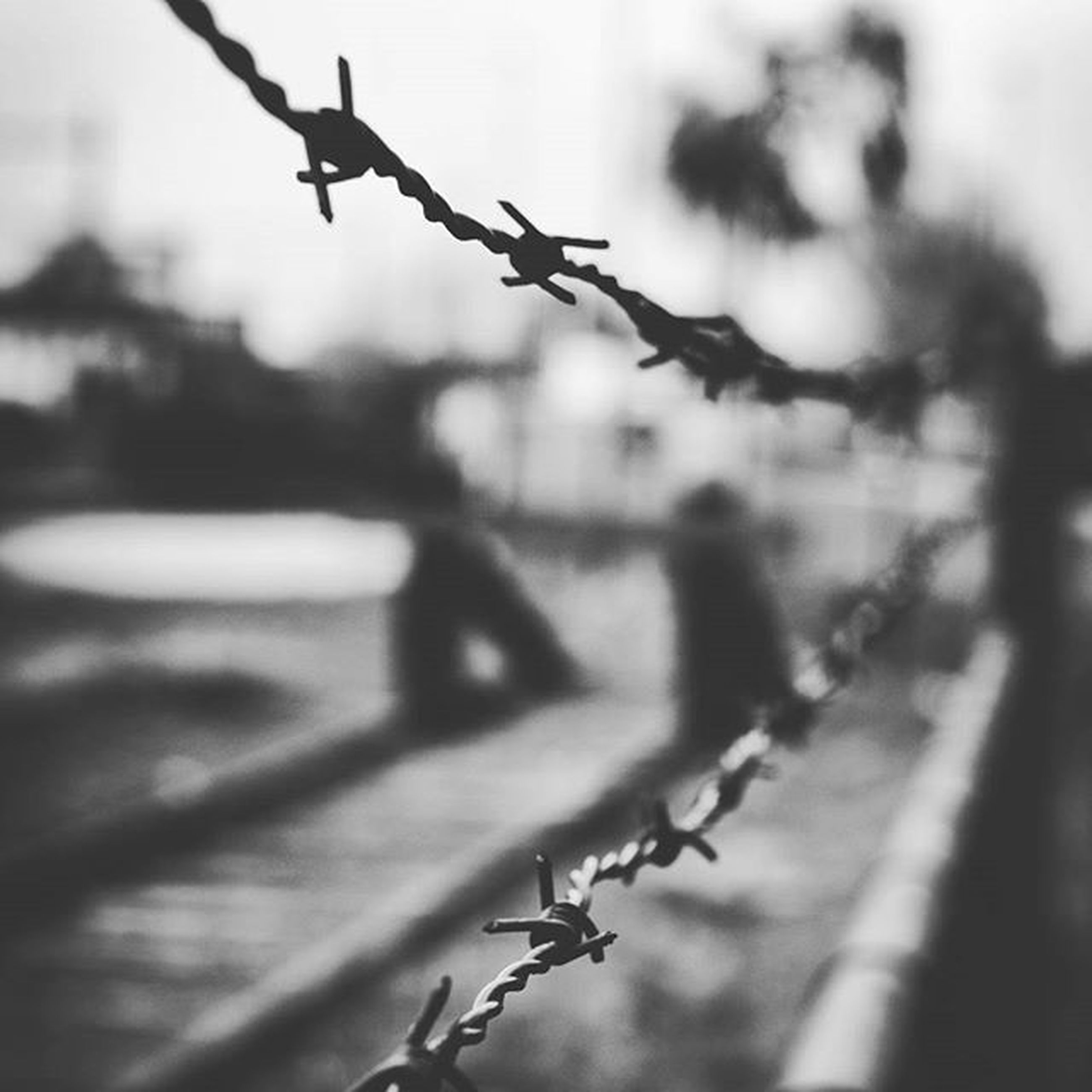 focus on foreground, fence, close-up, selective focus, metal, protection, safety, day, outdoors, barbed wire, railing, hanging, security, no people, metallic, nature, sunlight, in a row, twig, wire