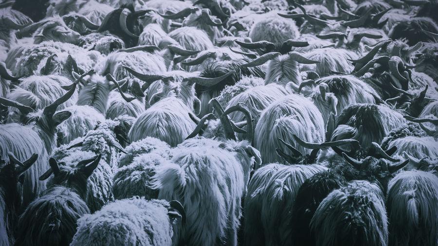 Flock of sheep outdoors at night