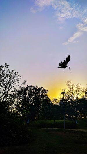 Bird Sunset Animal Wildlife Silhouette Animal Themes Flying No People Outdoors Sky Tree Nature Day Low Angle View The Great Outdoors - 2016 EyeEm Awards Architecture The Street Photographer - 2017 EyeEm Awards Live For The Story BYOPaper! Jaipur_diaries Buildinghishome Sommergefühle EyeEm Selects Neon Life