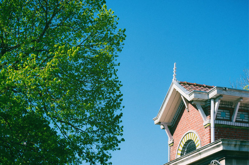 Low angle view of trees and building against blue sky