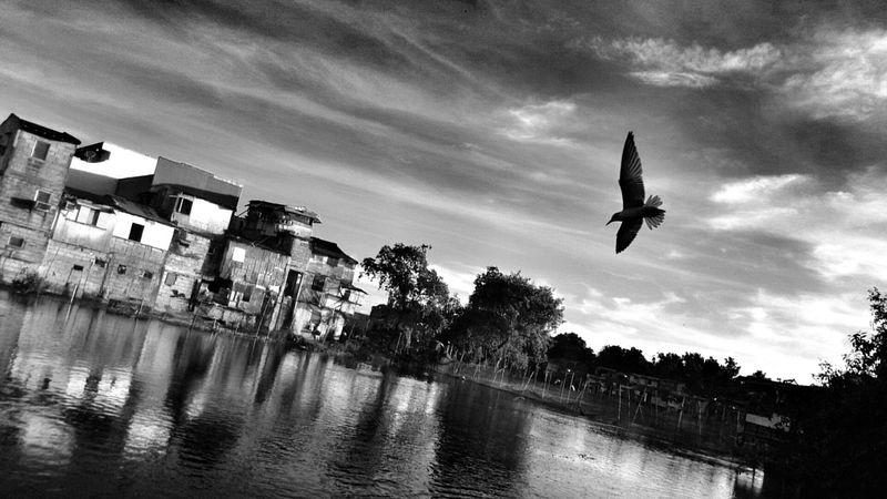 Sony Xperia Z1 Takenwithxperia Itsme_itsXperia Shotbyxperia Timeshift Burst Scenics Bird Morning View