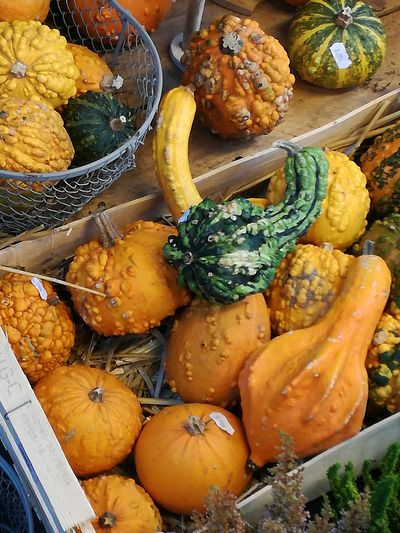 🍂Autumn🍁 Fruits Cucurbitaceae Cucurbitum Courge Autumn🍁🍁🍁 Autumn Autumn Collection 🍂🍁👢autumn 🌿natural 🌿☘️🌲🍃 🍂Fall🍁 Plants 🌱 🍂🍂🍁🍁 Season Happy Smartphonephotography Picture Perfect HuaweiP9Photography Huaweiphotography Picture Beautiful ♥ Beauty Of Nature Weekend Activities Eyem Gallery