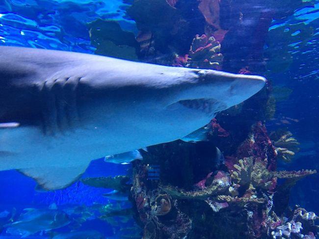Underwater Water Sea Animals In The Wild Animal Wildlife Animal Themes Fish Animal Swimming Sea Life Aquarium UnderSea Tank Shark