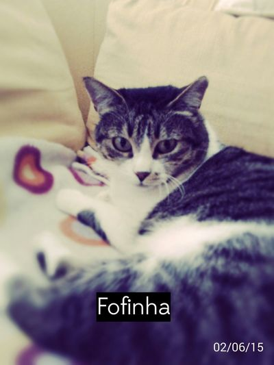 A minha gata fofinha