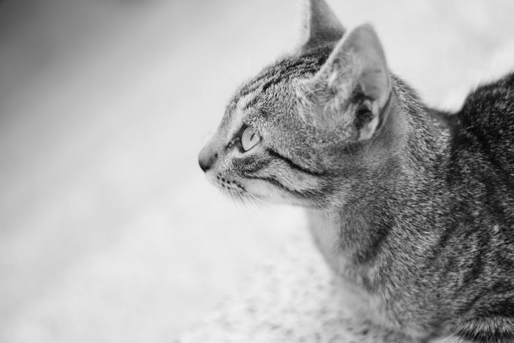 © www.rodiphotography.com Blackandwhite Black And White Blackandwhite Photography Cat Cats Cat♡ Cat Lovers Animal Themes Animals In The Wild Animal Wildlife Animal Portrait Leopard Close-up Sky Feline Undomesticated Cat Captive Animals Cat Family Domestic Cat Big Cat Stray Animal Tabby