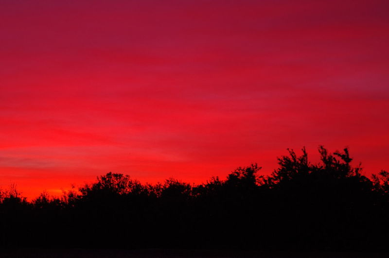 Almond Orchard Astronomy Beauty In Nature California Sunset Natural Brilliant Sunset Nature No Filter, No Edit, Just Photography No People Outdoors Pink Sunset Red Silhouette Sky Sunset Sunset Silhouettes Sunsets Tree Best Shots EyeEm Best Sunrises And Sunsets Another World Dreamlike Atmosphere Dreamlike Sky Live For The Story
