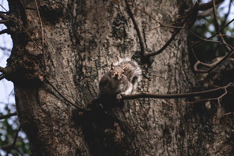 Squirrel Mammal Fluffy Adorable Nut Park Outdoors Tree Plant Arachnid Nature Day No People Trunk Animal Wildlife Tree Trunk One Animal Animal Themes Animal Forest Animals In The Wild Close-up Growth