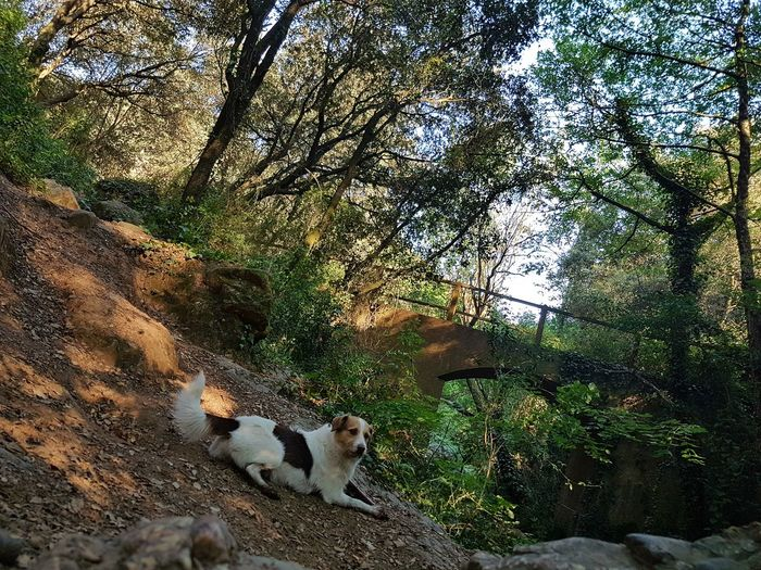 Animal Themes Dog❤ Nature Reserve Nature Photography Nature_collection Naturelovers Naturelover Dogs Dog Portrait Beauty In Nature Dog Lover Dogs Of EyeEm Dog Photography Tranquil Scene Agua,nature,water Paisaje Natural Sunset Forever