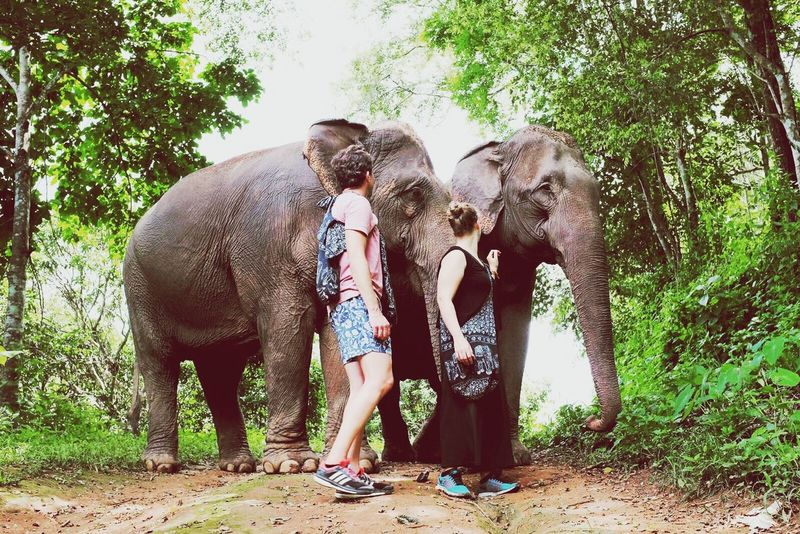Thailand Front View Elephants Traveling Travellers Travel Destinations Travel Photography Travelingtheworld  Animals Nature Photography Elephantnaturepark Chiang Mai | Thailand First Eyeem Photo