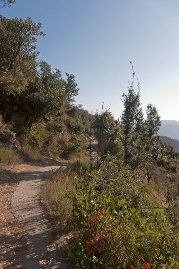 Footpath India Mukteshwar Orange Path Beauty In Nature Blue Clear Sky Day Embankment Flower Growth Hillside Landscape Mountain Nature No People Outdoors Plant Scenics Sky The Way Forward Tree Uttarakhand Way