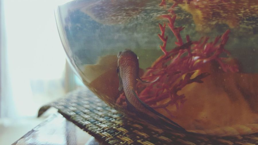 Indoors  Day Animal Themes Fish Close-up No People Fish Bowl Colorful PhonePhotography Light Peace And Quiet Daylight