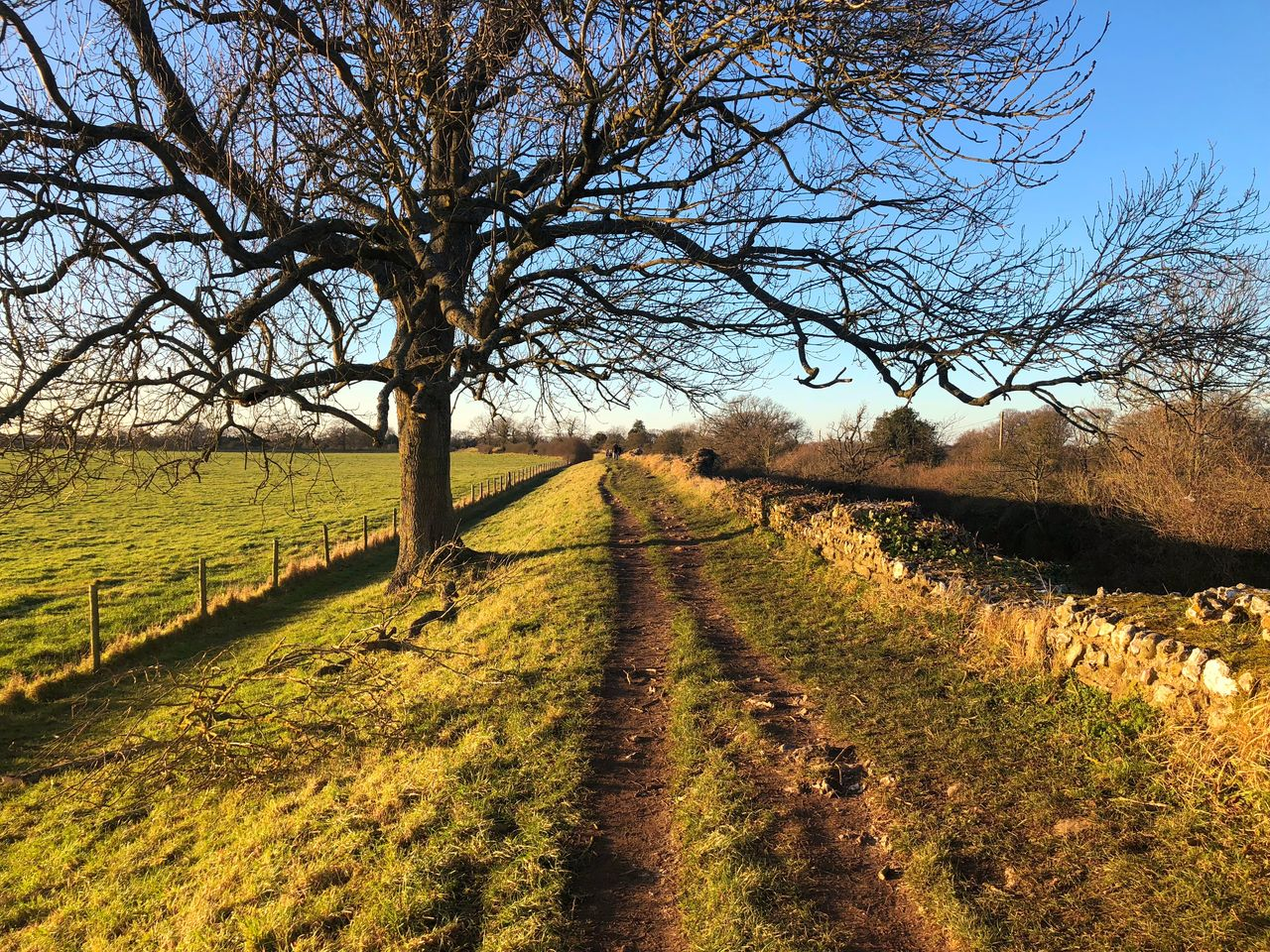 bare tree, field, landscape, tree, tranquility, tranquil scene, nature, beauty in nature, day, scenics, grass, the way forward, outdoors, rural scene, no people, sunlight, sky, clear sky