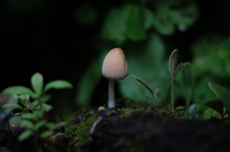 Close-up of mushrooms growing outdoors