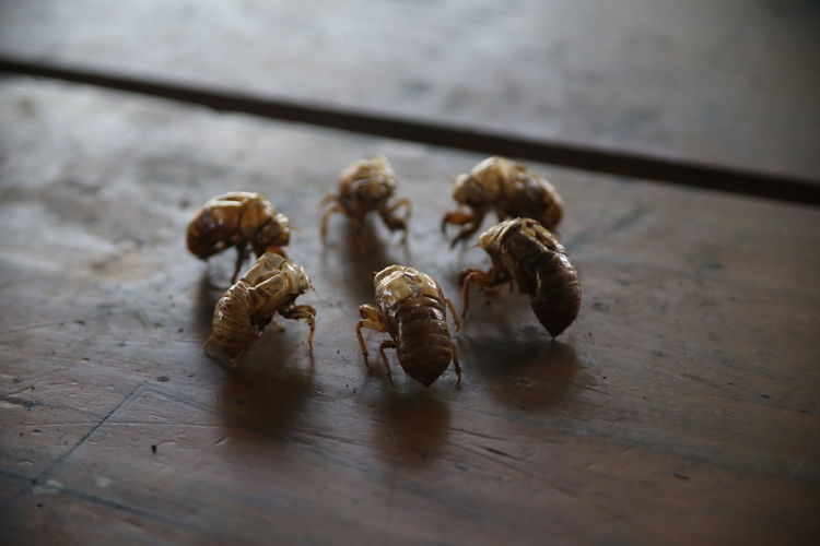 High angle view of insect on table