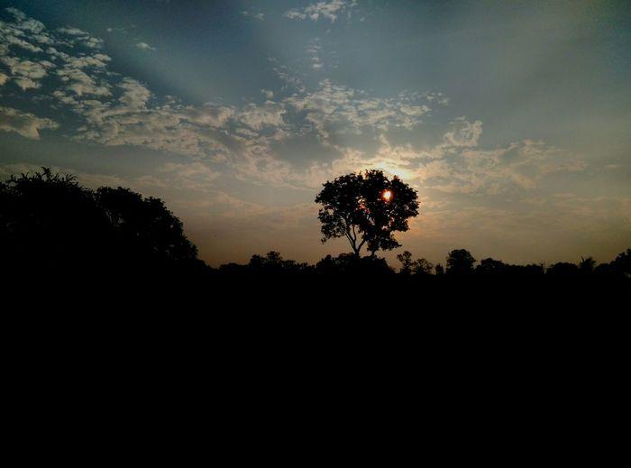 Unmeshshirsath Usphotography Morning Light Sunrise Sunlight Trees Maharashtra Golden Hour Blue Relax Lovely Amazing Colourful
